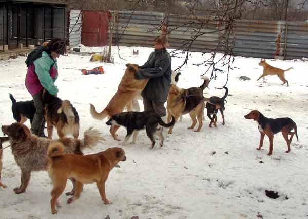 Елица Енева (вдясно) и доброволка хранят кучетата в двора на кастрационния център. Снимки: авторът