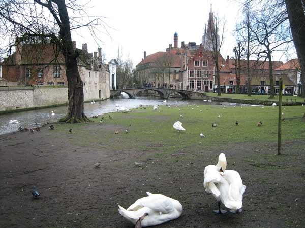 Парка с лебедите, в близост до Бегинажа (Метоха). Снимки: авторката