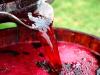 Прогрес – и домашното вино вече го квасят с култивирани дрожди