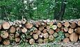 """Гражданска инициатива """"Да спасим Борисова градина"""": Спрете разграбването. Върнете предложения ПУП в начална фаза"""