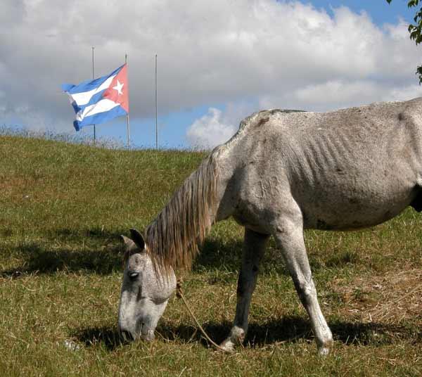 Кобила пасе край кубинското знаме, недалеч от мемориала на Че Гевара в Санта Клара.Снимки: авторът