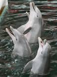 Делфините чакат наградата за изпълнените номера - по риба за всеки. Снимки: Нели Томова