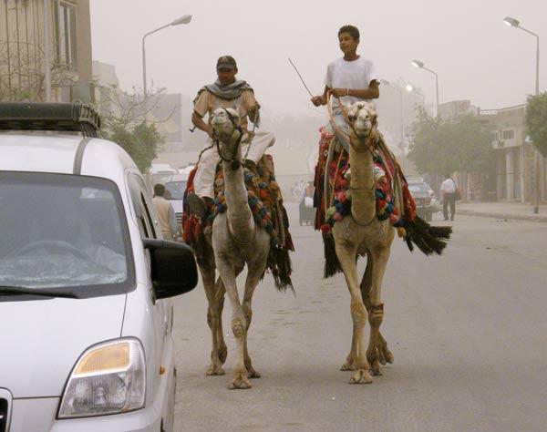 В квартала Газа по улиците е нормално да се движат камили заедно с колите. Снимки: Иван Бакалов