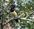 Птица в Национален парк Игуасу, Аржентина. Снимка: Евгения Волен