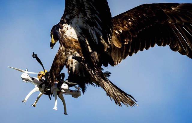 Орел лови дрон