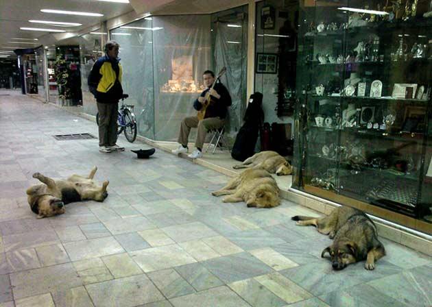 Кучета и музиканти в софийските подлези