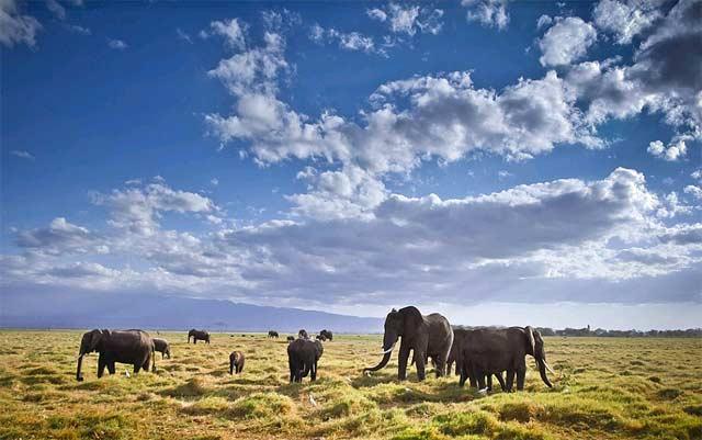 Слоновете на Африка