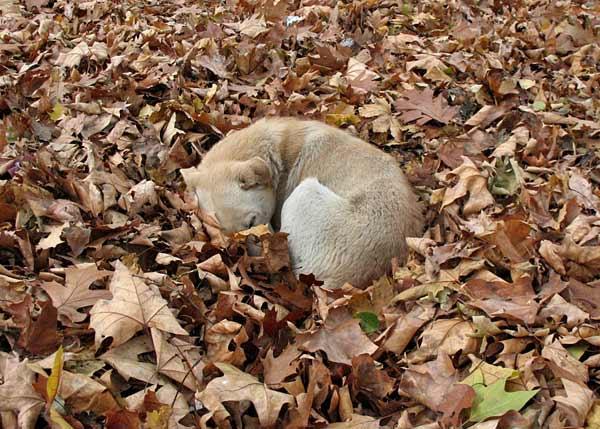 Бездомните кучета на София