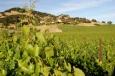 Американското вино падна жертва на търговската война с Китай