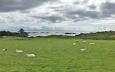 Овцете изядоха хората, хората изпиха уискито – да се разходиш из Шотландия