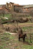 Магаре в началото на село Долно Луково. Снимки: Нели Томова