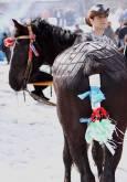 Украсен и артистично сресан кон. Снимки: Нели Томова