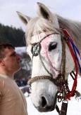 Собственикът на Белия лебед е полял коня си с няколко капки вино за късмет. Снимки: Нели Томова
