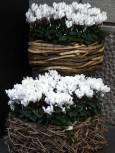 Нестандартни букети, изложени пред цветарски магазин. Снимки: Нели Томова
