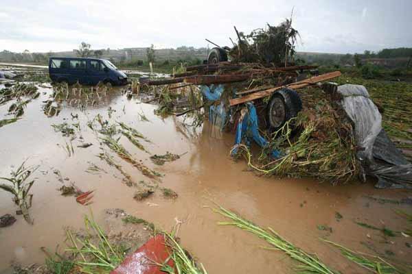 Коли, отнесени от водата в полето край Цар Калоян. Снимка: Булфото