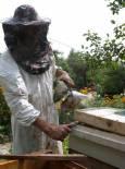 Деян отваря кошера с рамков повдигач и разгонва пчелите с дима от