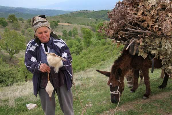 Баба Мария преде вълна, дакото води магаретата, натоварени с дърва и шума. Снимка: Иван Бакалов