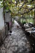 С. Долно Озирово, дворът на 66-годишната Виолета. Снимка: Веселина Димитрова