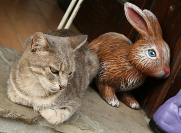 Керамичен заек и истинска котка на входа на магазинче в стария град. Снимки: авторката