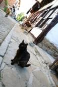Тревненските котки не се страхуват от минувачите и се държат като господари на улиците. Снимки: авторката