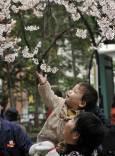 Дете и майка му се радват на цъфналите череши в Токийския Уено парк. Снимка: ЕПА/АП/БТА