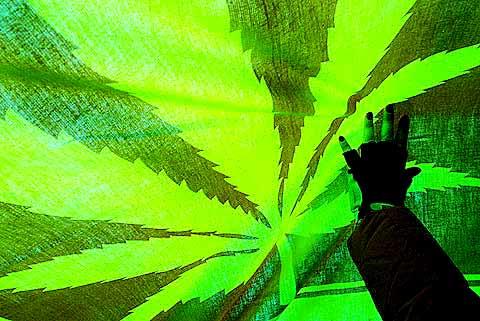 cannabisimg_2.jpg