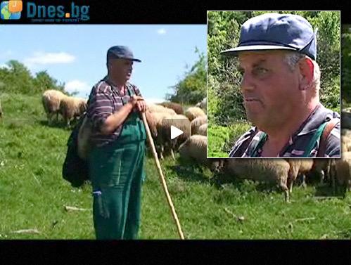 Англичанин овчар в България